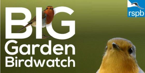 Big Garden Birdwatch!